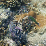 Parrotfish Στοκ φωτογραφία με δικαίωμα ελεύθερης χρήσης