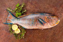 Parrotfish with lemon and herbs on grunge background