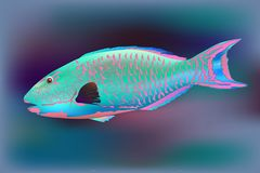 Parrotfish, vector illustration stock illustration