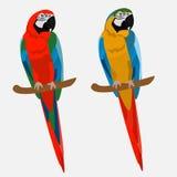 Parrots громкая ар яркая иллюстрация вектора
