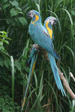 Parrots. A photo of parrots at a zoo Stock Photo