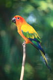 The Parrots. The parrot in the bird santuary Royalty Free Stock Images