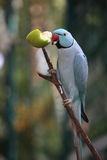 The Parrots. The parrot in the bird santuary Royalty Free Stock Photography