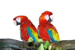 Parrots. In zoo in Riga Royalty Free Stock Photography