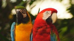 Parrots stock video