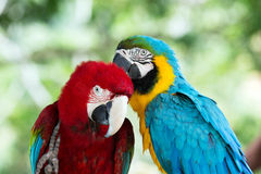 Parrots stock photos