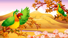 Parrots in an autumn scenery Royalty Free Stock Photo