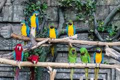 Parrots bird macaw sit on a branch. Royalty Free Stock Photo