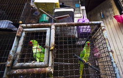 Parrots in a cage Royalty Free Stock Photography