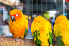 The parrots are in a cage. Royalty Free Stock Images