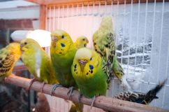 Parrots in a cage stock images