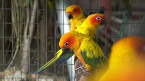 Parrots in a cage. At the zoo stock footage