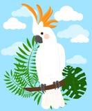 Parrots Cartoon Vector Illustration. Parrot set Exotic birds Royalty Free Stock Photo