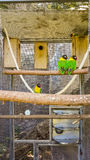 Parrots in cell. In Canarian zoo Stock Image