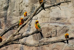 Parrots. Colorful parrots on their perch Stock Photography