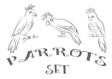 Parrots Contours. Cartoon Birds Parrots, Black Contours Isolated on White Background. Vector Stock Image