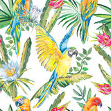 Parrots and exotic flowers. Macaw seamless pattern.Topical flower,leaves pitaya.Dragonfruit. Royalty Free Stock Photos