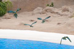 Parrots flying Royalty Free Stock Photo
