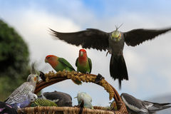 The parrots. A group of multicolored parrots Stock Photography