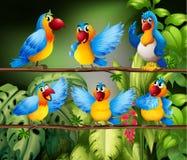 Parrots stock illustration