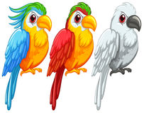 Parrots royalty free illustration