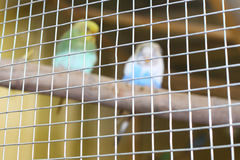 The parrots Royalty Free Stock Photos