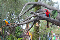 Parrots. Large parrots sitting on tree branches Stock Photo