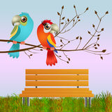 Parrots in love Royalty Free Stock Photo