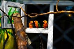 Parrots lovebirds stock image
