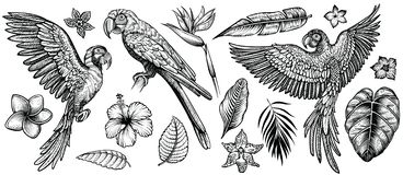 Parrots macaw with tropical flowers and leaves, hand drawn line vector collection. stock illustration