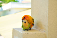 Parrots at Maldives 15 royalty free stock images