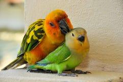 Parrots at Maldives 7 Royalty Free Stock Photo