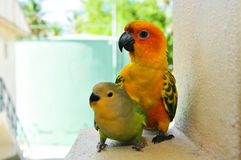 Parrots at Maldives stock photo