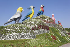 Parrots at the Miracle Garden in Dubai Royalty Free Stock Photo