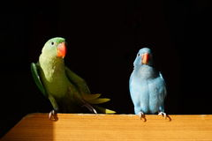 Parrots. My parrots cute Stock Photos