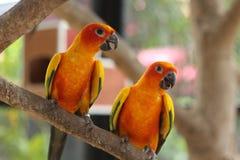Parrots. Parrot in Zoo at petburi Royalty Free Stock Photos