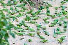 Parrots Stock Photos