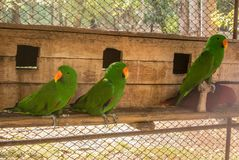 Parrots or psittacines are birds found in most tropical. And subtropical regions. The greatest diversity of parrots is in South America and Australasia stock photos