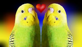 Parrots and red heart Royalty Free Stock Photography