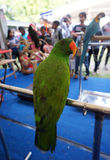 Parrots Royalty Free Stock Photos