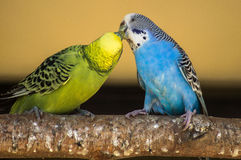 Parrots in the Russian zoo. Stock Images