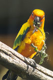 Parrots in the Russian zoo. Royalty Free Stock Photography