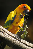 Parrots in the Russian zoo. Stock Photography
