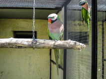 Parrots in the Russian zoo. Stock Photo