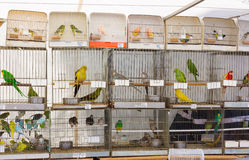 Parrots for sale Stock Photos