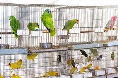 Parrots for sale Stock Photography