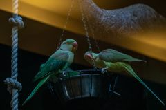 Parrots sit on the trough royalty free stock photography