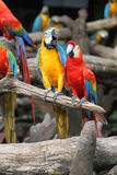 Parrots standing on branch. In Safari world zoo Thailand Stock Photo