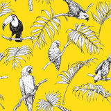 Parrots and Toucan Sketch Pattern Royalty Free Stock Images