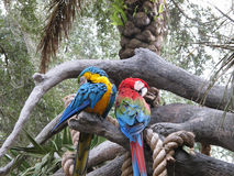 Parrots on tree branch Stock Photography